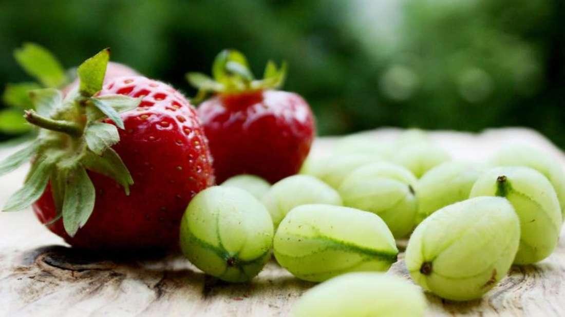 Obst vom eigenen Balkon für den eigenenTisch: Stachelbeeren und Erdbeeren wachsen auch imTopf heran. Foto: Mascha Brichta/dpa-tmn