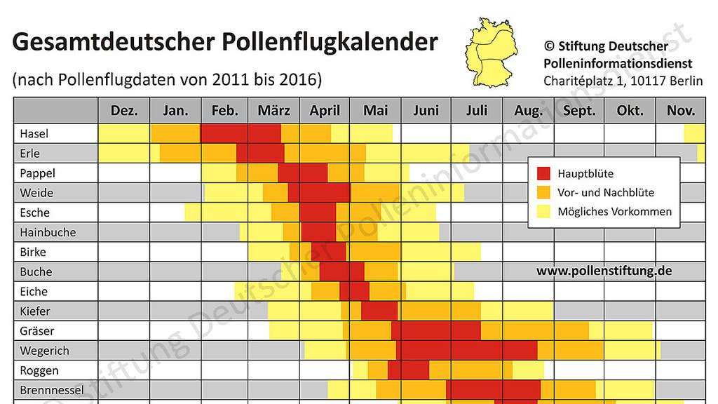 Welche Pollen Fliegen Zur Zeit