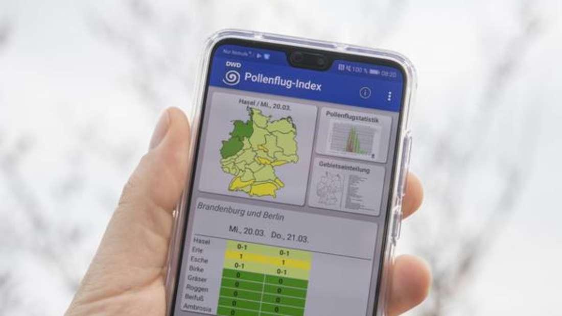 Pollenflug-Vorhersage per App mit dem aktuellen Blüten-Flugkalender.