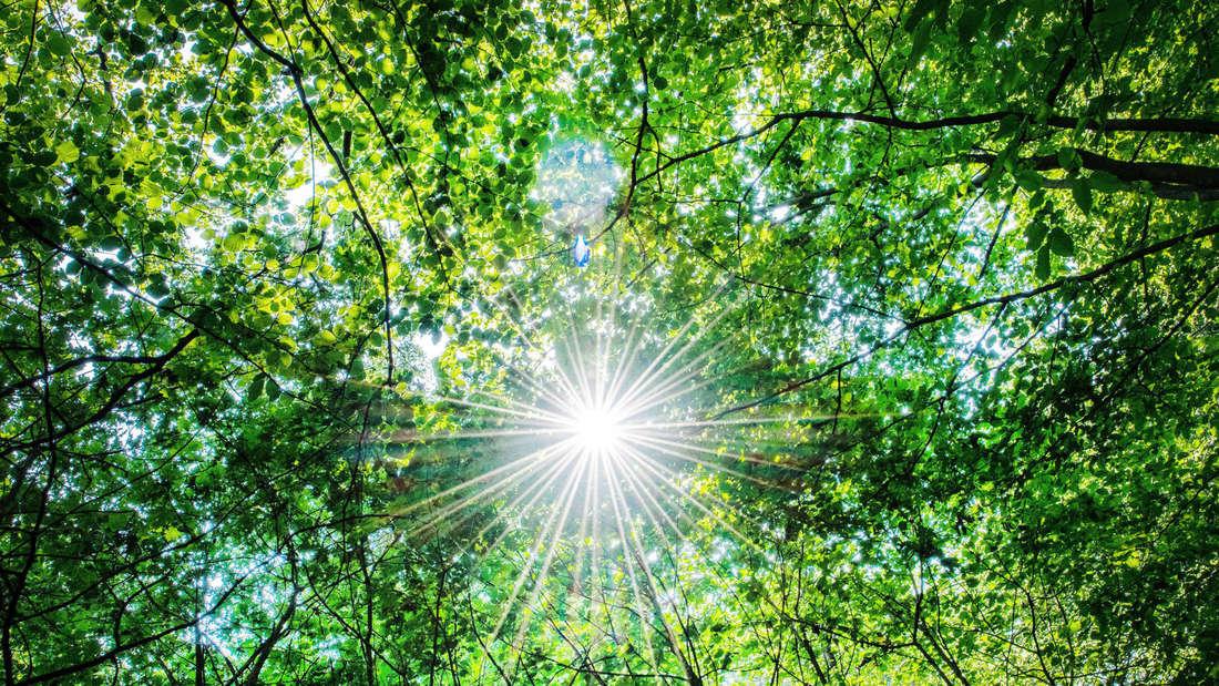 Die Sonne scheint durch ein Blätterdach im Wald (Symbolbild).