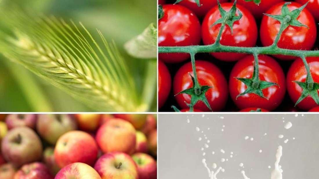 Gluten, Histamin, Fructose, Lactose: Bei Nahrungsmittelunverträglichkeiten ist es nicht ganz leicht, den richtigen Auslöser zu finden (Symbolbild).